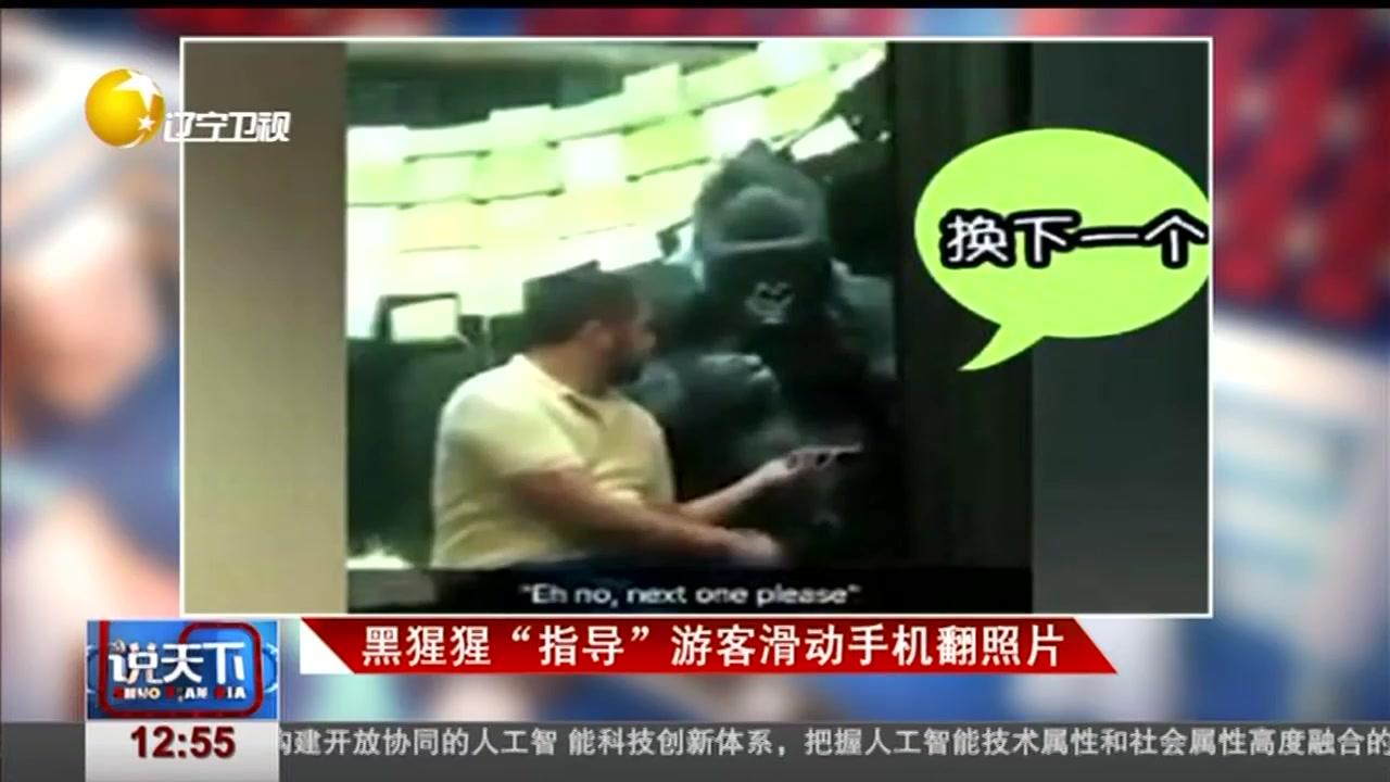 """黑猩猩""""指导""""游客滑动手机翻照片"""